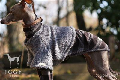 Classical Borel style Vest / Blue Grey in IGGYplus italian greyhound clothes