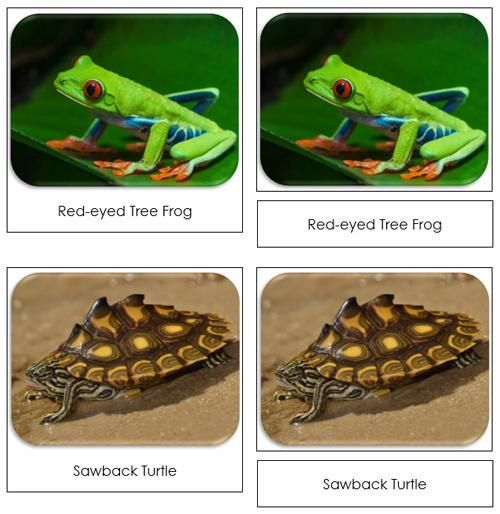 Frogs and Turtles Safari Toob Cards - printable cards by Montessori Print Shop