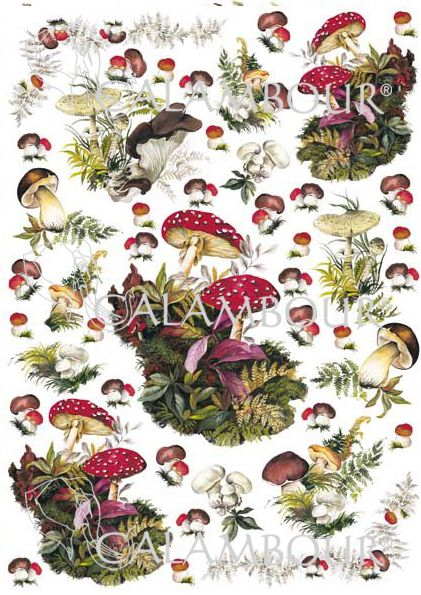 white, red and brown #mushrooms