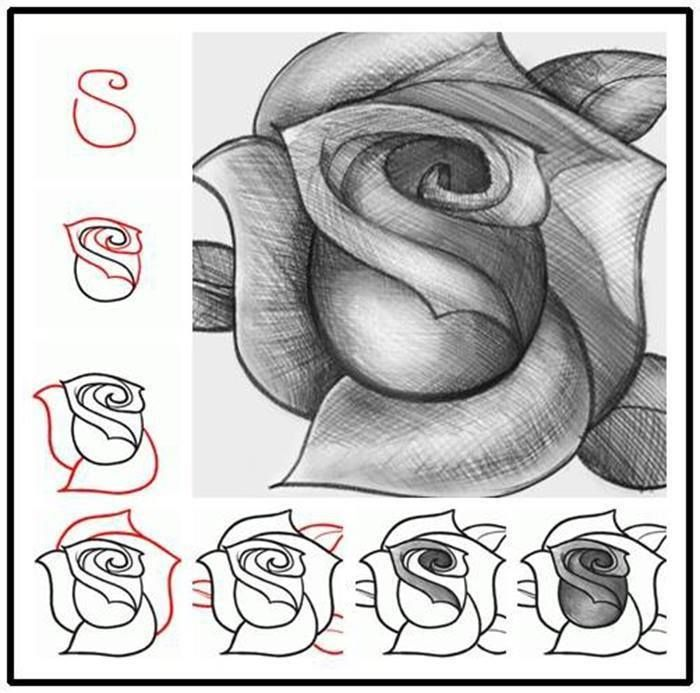 How to draw an rose.