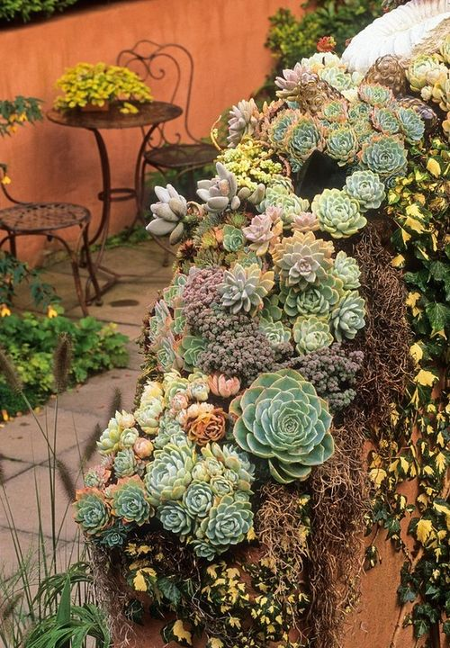 wasbella102:      Succulents