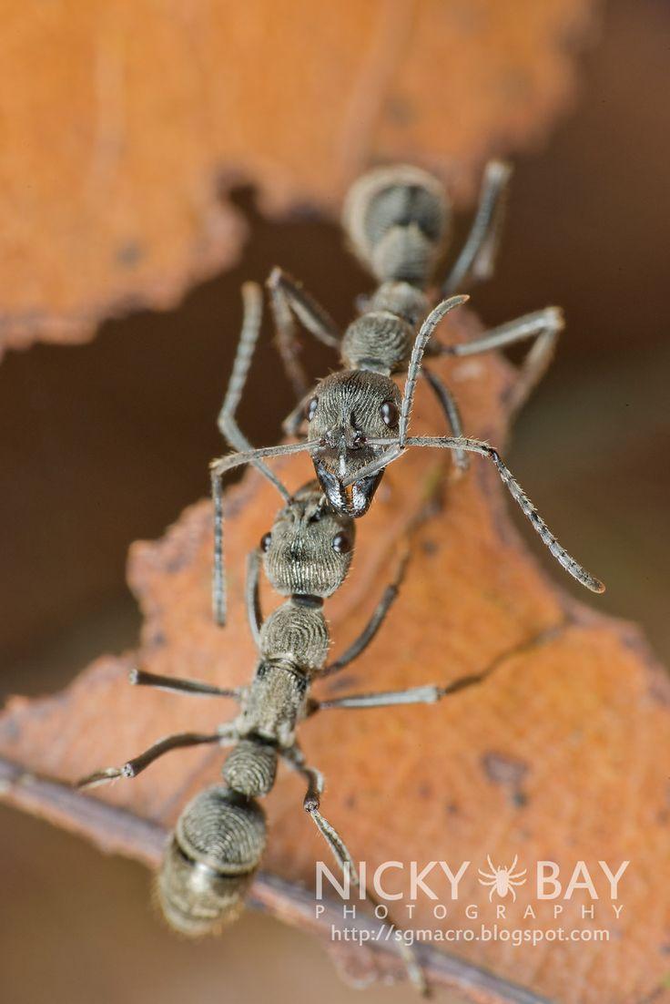die besten 25 ameisenkolonie ideen auf pinterest arten von ameisen ameisenarten und ameisen. Black Bedroom Furniture Sets. Home Design Ideas