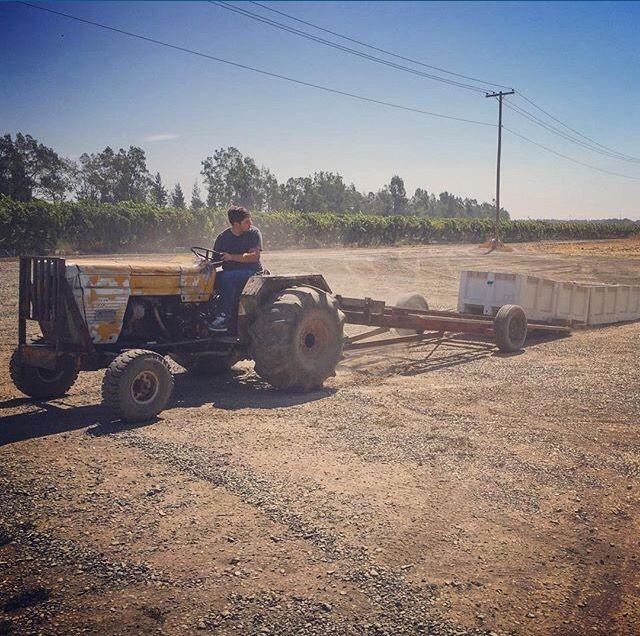 Austin hauling in the #pinot Grigio.