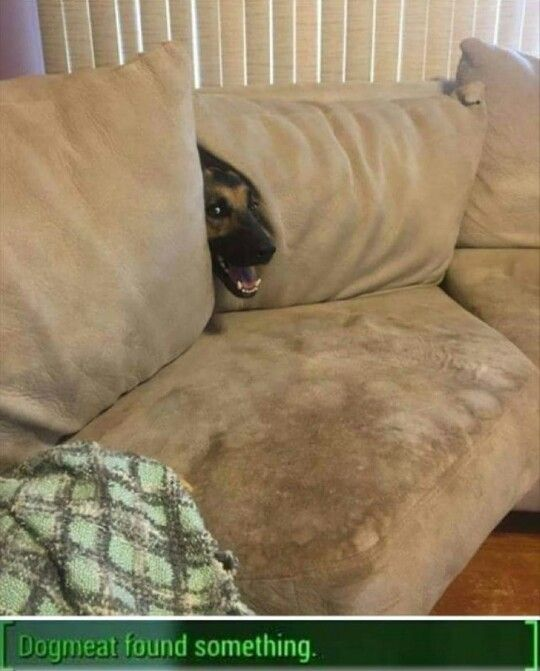 """Fallout 4   """"Dogmeat found something."""""""