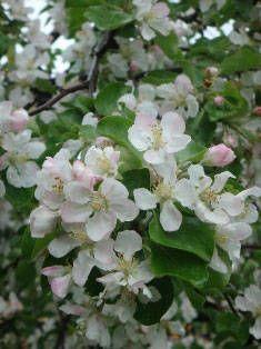 Вредители в саду - Сад, цветы и огород - Ни дня без творчества - Акуна матата: рукоделие, вышивка, сад и огород, проза