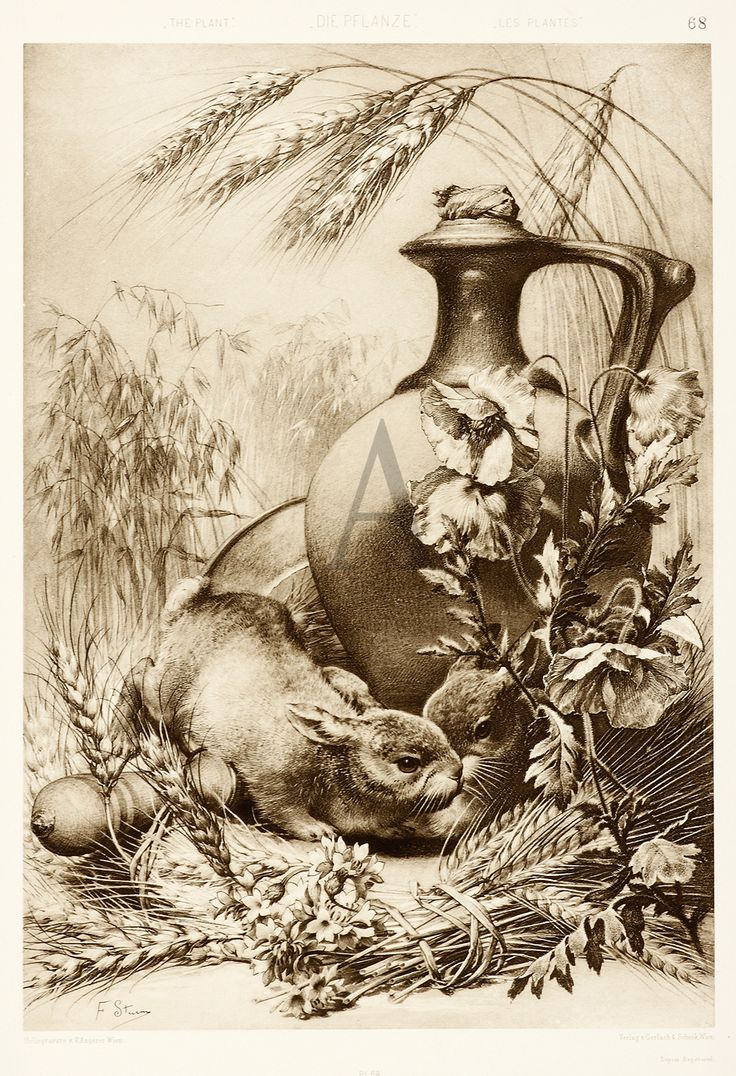 BOTANICAL ART NOUVEAU - Anton Seder. A group of this kind of art (framed) will look great in our dining room.