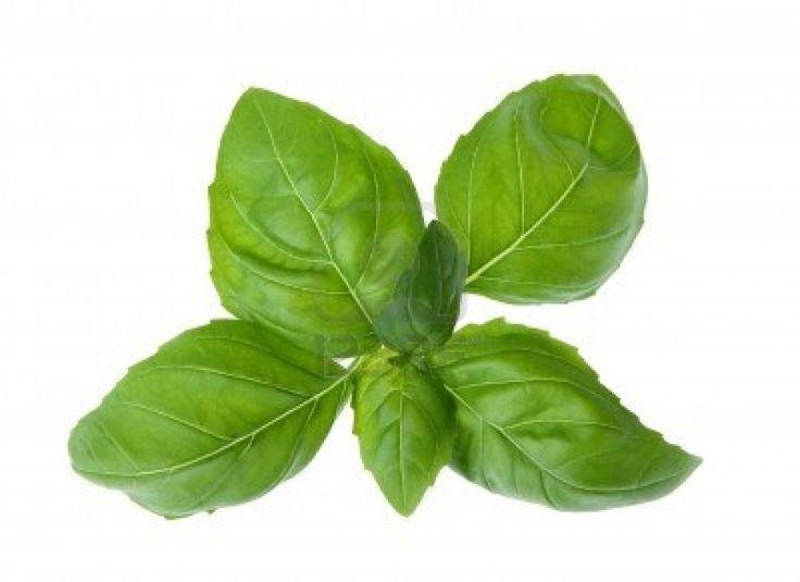 10 gyógynövény, amelyet otthon is termeszthet
