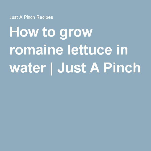 Best 25 Regrow Romaine Lettuce Ideas On Pinterest: 25+ Trending Grow Romaine Lettuce Ideas On Pinterest