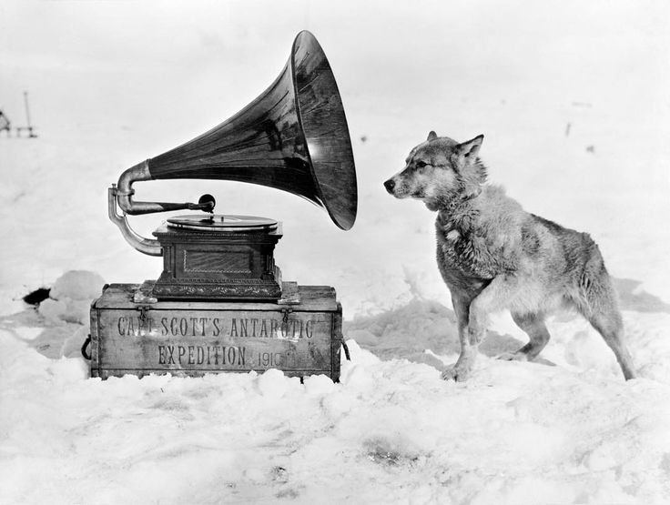 More than 100 years ago, British explorer Captain Robert Falcon Scott set off on his ill-fated journey to be the first man to reach the South Pole.  In this photo, Chris the sled dog listens to a gramophone in Antarctica, during Captain Robert Falcon Scott's Terra Nova Expedition to the Antarctic in 1911. (Photo by Herbert Ponting/Scott Polar Research Institute, University of Cambridge/Getty Images) #tbt #tbthursday #throwbackthursday