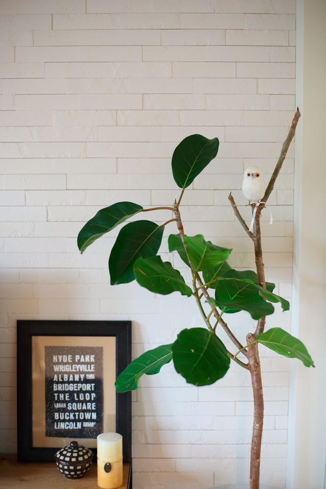 緑,観葉植物,白い壁,リノベーション,三井のリフォーム