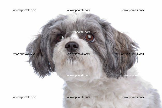 http://www.photaki.com/picture-mixed-breed-dog_1304528.htm