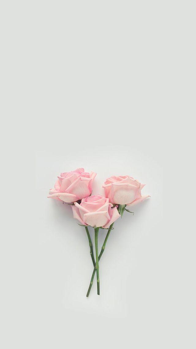 Pink | Pastell | Rosé | Lachs | Erröten | Pinku …