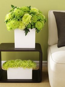 Increase Harmony and Balance in Your Home with the Right Color Choices: Green Color Feng Shui - Growth, Health, Vibrancy - Wood Element