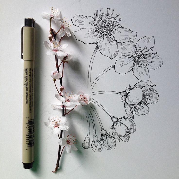 Fleurs en Progression par un Illustrateur Scientifique - Chambre237