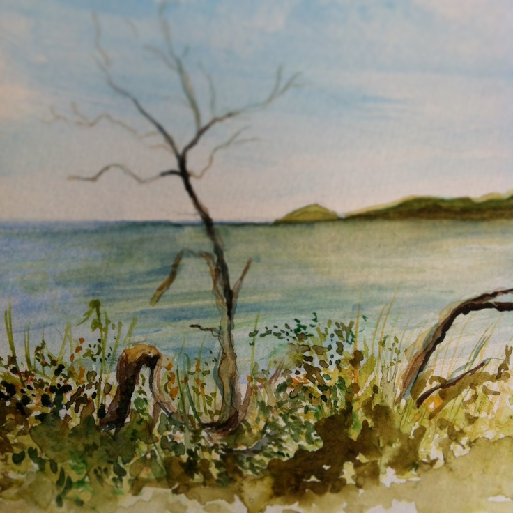 #watercolours #wilsonsprom #nature #observationdrawing #natural #drawing #sketching #art