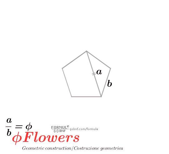 Phi Flowers, geometric construction (Pentagon)/Costruzione geometrica (Pentagono) http://gobnf.com/formule
