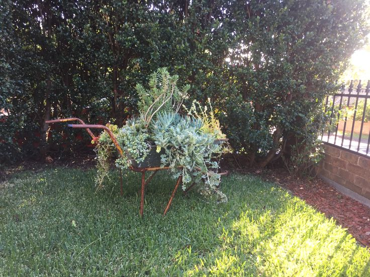 My beautiful succulent wheelbarrow