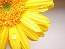 yellow에 대한 이미지 검색결과