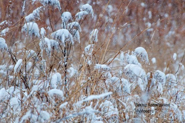 Метель и метелки. Первый снег декабря