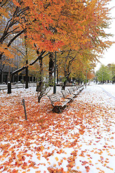 札幌大通公園の美しすぎる写真 紅葉と雪が混ざり合った景色に感動の声 (2016年11月9日掲載) - ライブドアニュース