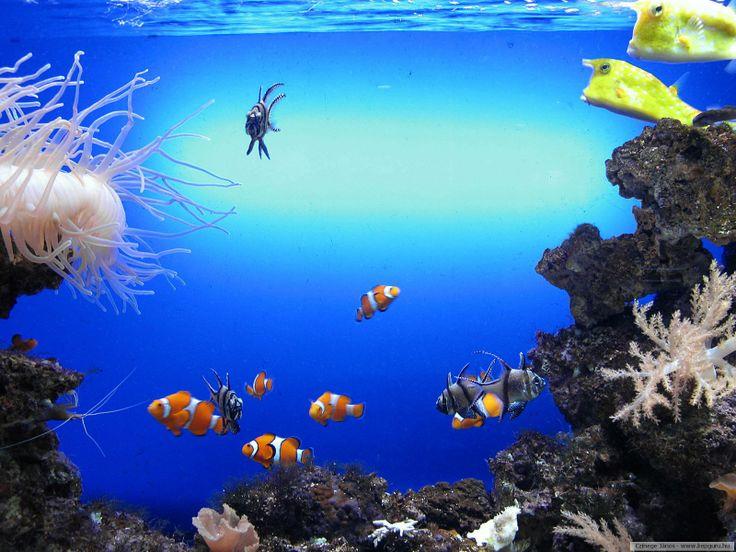 Top 27 Sea Animals Wallpapers In Hd: 89 Best Deep Sea Animal's Corel Aqua HD Wallpapers Images