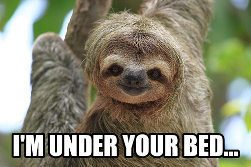 Funny Sloth Memes | Generate a meme using sloth