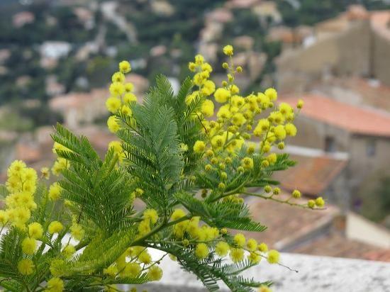 14 best la route du mimosa images on pinterest mimosas - Office de tourisme de bormes les mimosas ...