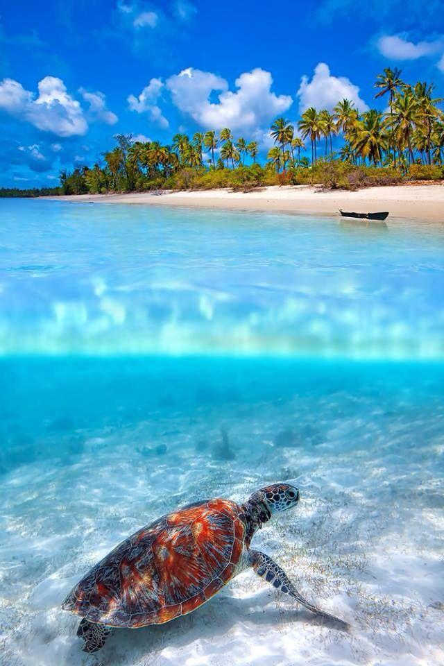 Maladives! This was my dream honeymoon! ❤️