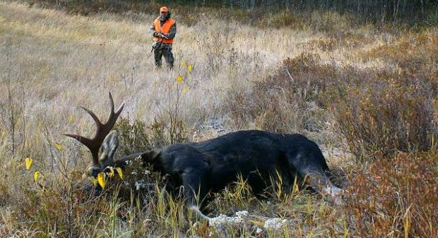 Ah, moose hunting. What is it about Canada's most majestic animal that has so many of us counting the days until opening weekend? For many hunters, the low grunt of ...