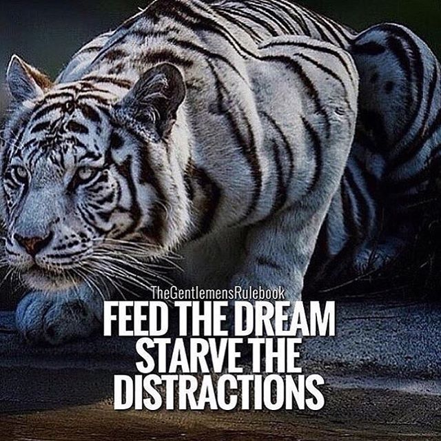 Follow your dreams! #stayfocused #workhard Follow us @motivation2.study for more student motivation!