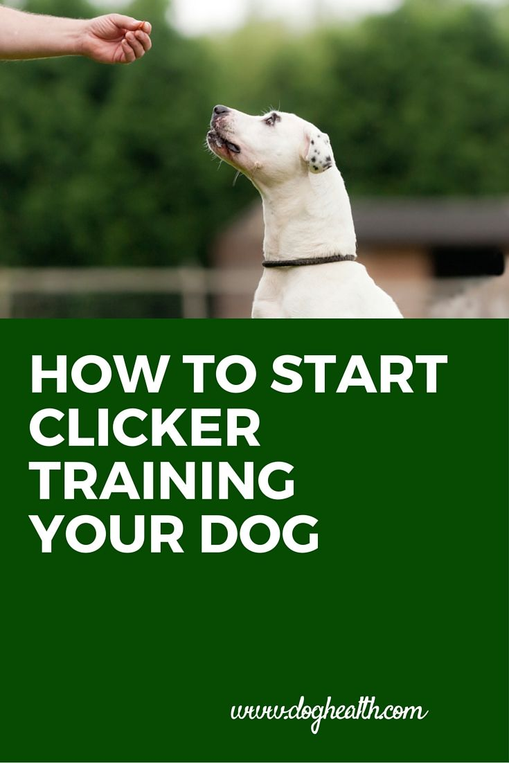 Clicker training for #dogs has become a highly popular means of training using positive reinforcement. In this article learn from a veterinarian why clicker training works, how to get started with clicker training and then how to facilitate learning through clicker training from DogHealth.Com.