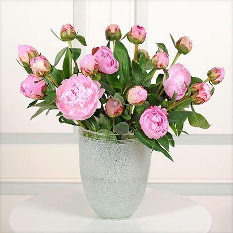 Blume 2000 | Anbieter | floraheld.de