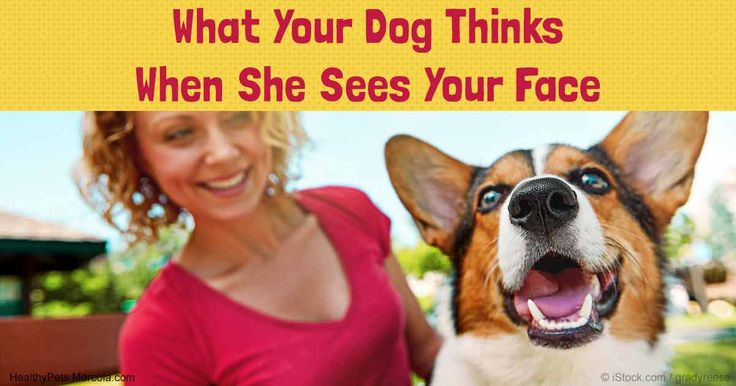 When dogs were shown human images while in an MRI scanner, activity increased in the temporal cortex region of their brain. http://healthypets.mercola.com/sites/healthypets/archive/2016/11/21/dog-brain-activity.aspx