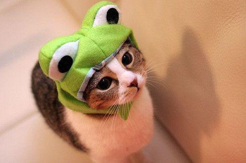 Cutee !! frog cat  www.LastinLightReiki.com  www.Facebook.com/LastingLightYogaandReiki  P - #YogaReikiUp  T - #YogaReikiUp