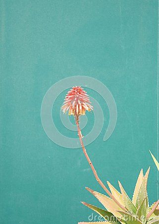 Isoleted flower with green background