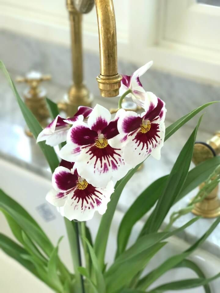 Today I am sharing common types and tips for caring for orchids. For me orchids are the answer to the call for fresh flowers in late summer. By the end of August the garden is a bit worn out. Too hot to plant anything new until cooler autumn temperatures come to town. Fewer garden flowers [Read more...]