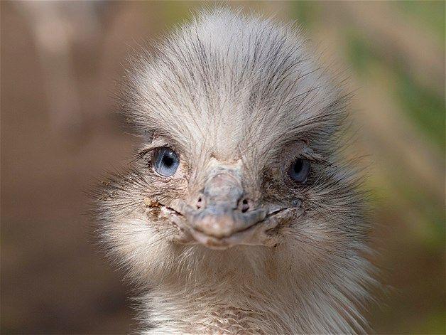 Afbeelding: Lachende dieren (© Tracey Whitefoot/Alamy)