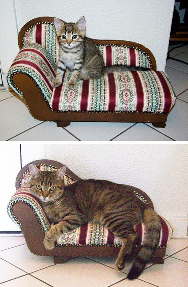 Best 20 small chaise sofa ideas on pinterest small for Cat chaise lounge uk