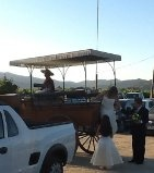 arriving in horse drawn carriage through the vineyards