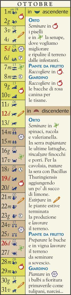 Almanacco oggi - Cosa Piantare ad Ottobre