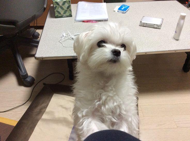 My Dog Ellie!!!!