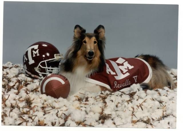 Photo Gallery: Reveille - Texas A&M Official Athletic Site - AggieAthletics.com