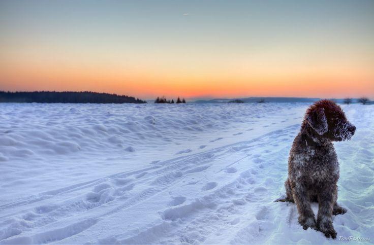 Bubu in the snow