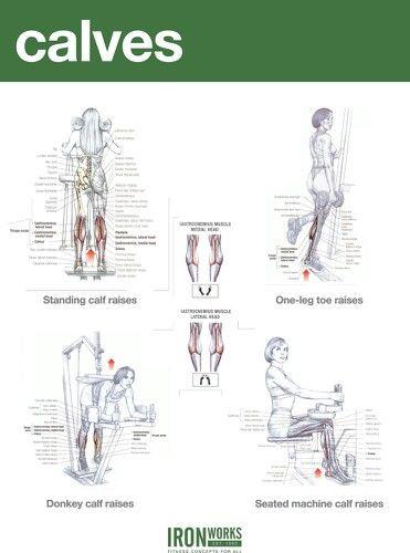 Calves Workout Chart