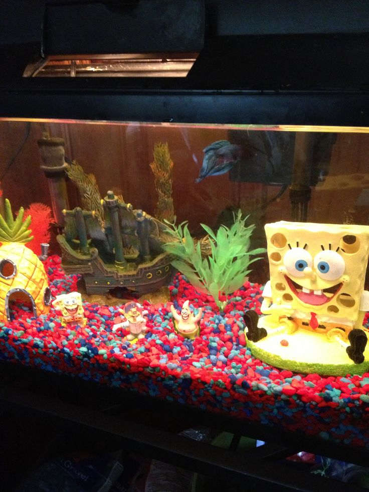 Sponge bob fish tank kids would love this fish for Fish tanks for kids