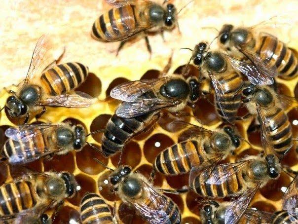 Ορεινή Μέλισσα: Έξυπνοι χειρισμοί-Περισσότερα μέλια!