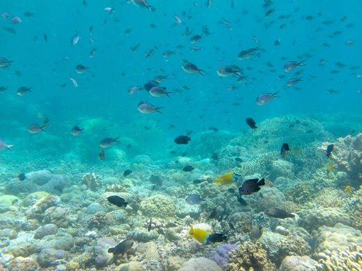 Colorful fishes: Bunaken offers some of the best underwater scenery in Indonesia. (Photo by Indohoy)