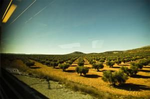 Everything you need to know about public transport in Spain: Trains and Buses in Andalusia