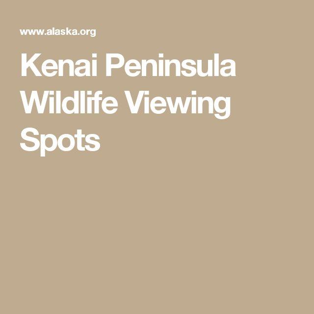 Kenai Peninsula Wildlife Viewing Spots