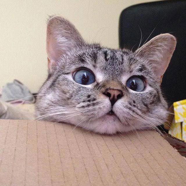 подвеска изначально кошка нала фото
